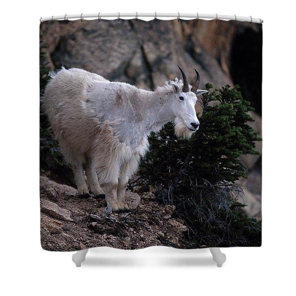 Okanogan National Forest Shower Curtain