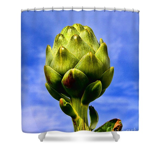 Okey Dokey Artie Choke E Artichokes By Diana Sainz Shower Curtain