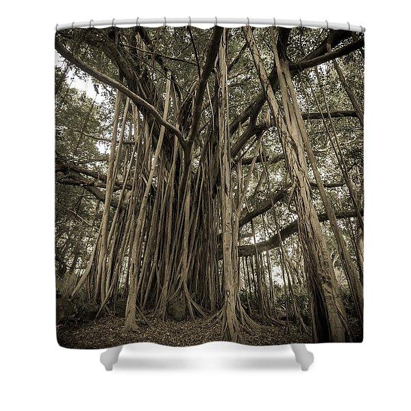 Old Banyan Tree Shower Curtain