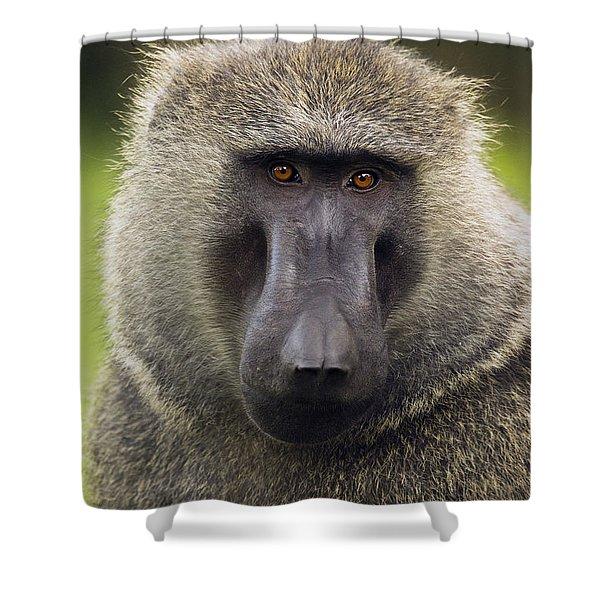 Olive Baboon Male Kibale Np Uganda Shower Curtain