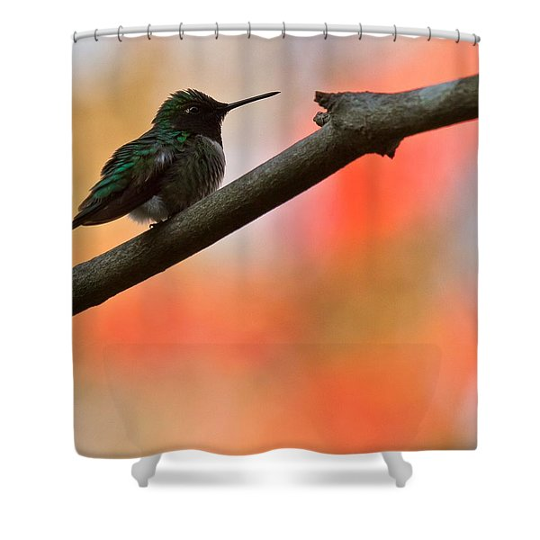 Shower Curtain featuring the photograph On Guard by Robert L Jackson
