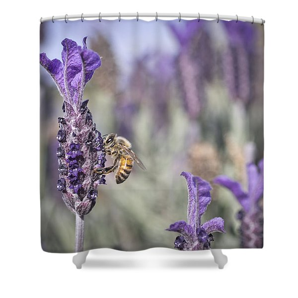 On The Lavender  Shower Curtain