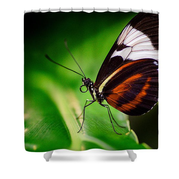 On The Wings Of Beauty Shower Curtain