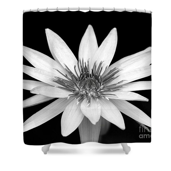 One Black And White Water Lily Shower Curtain
