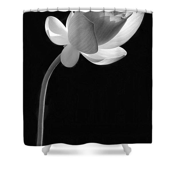 One Lotus Bud Shower Curtain
