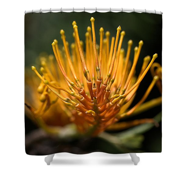 Orange Grevillea Shower Curtain