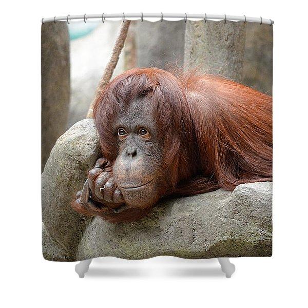 Orangutans Day Shower Curtain