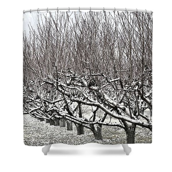 Orchard In Winter Shower Curtain