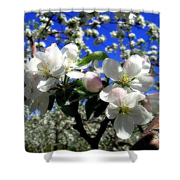 Orchard Ovation Shower Curtain
