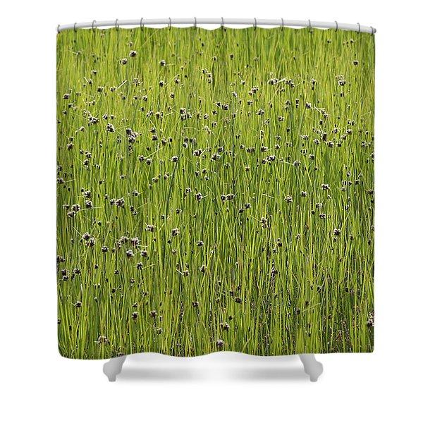 Organic Green Grass Backround Shower Curtain