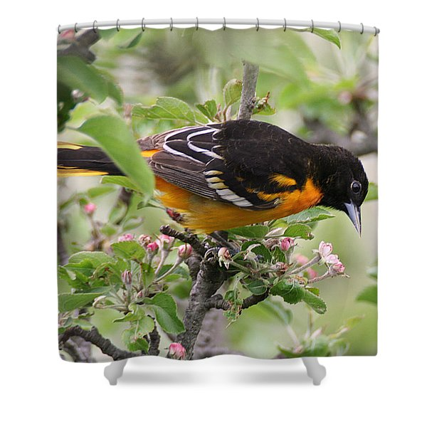 Oriole With Apple Blossoms Shower Curtain