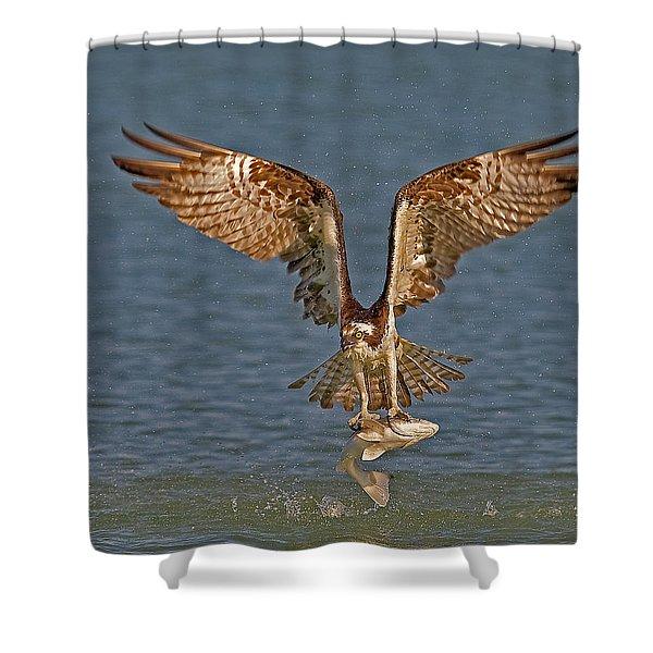 Osprey Morning Catch Shower Curtain
