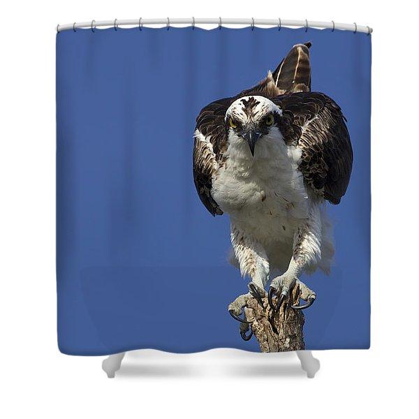 Osprey Photo Shower Curtain