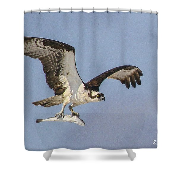 Osprey With Dinner Shower Curtain