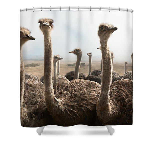 Ostrich Heads Shower Curtain