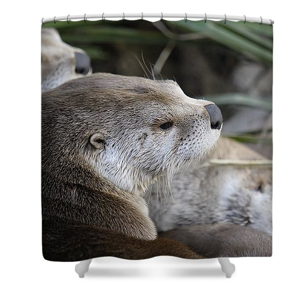 Otter And Family Shower Curtain