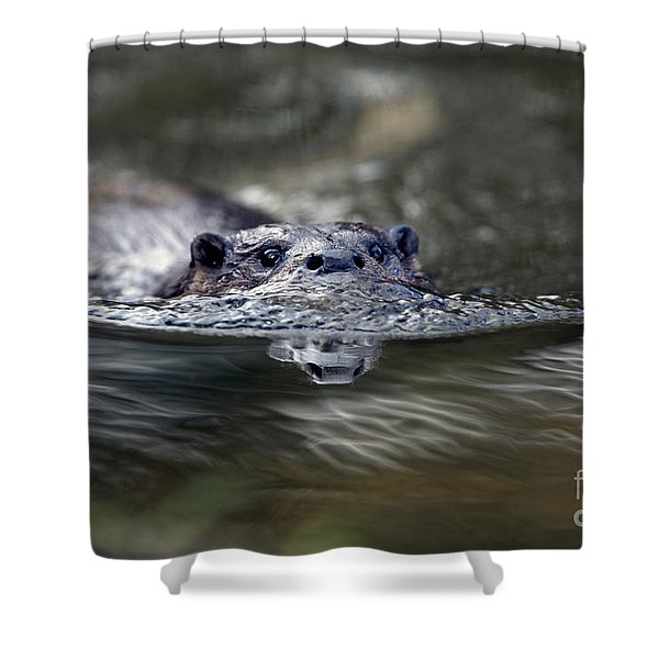 Otter Swimming Shower Curtain