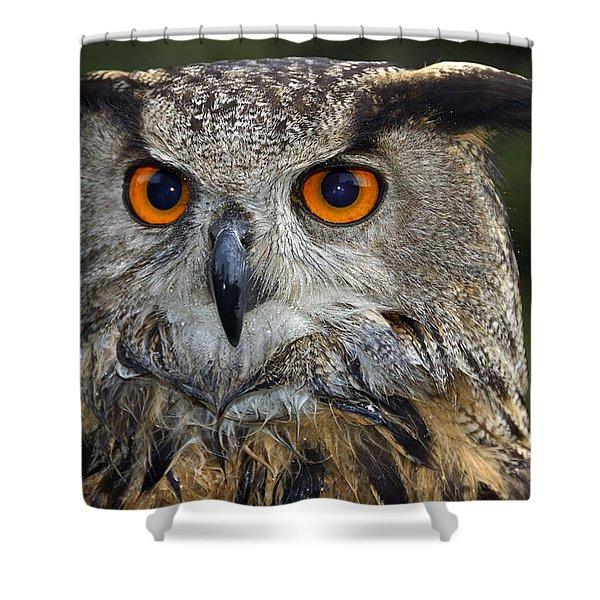Owl Bubo Bubo Portrait Shower Curtain