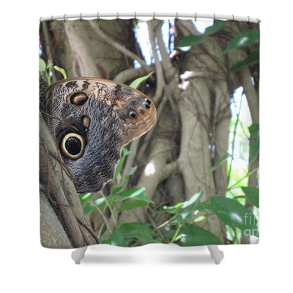 Owl Butterfly In Hiding Shower Curtain