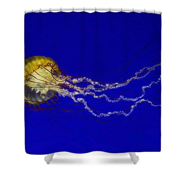 Pacific Sea Nettle Shower Curtain
