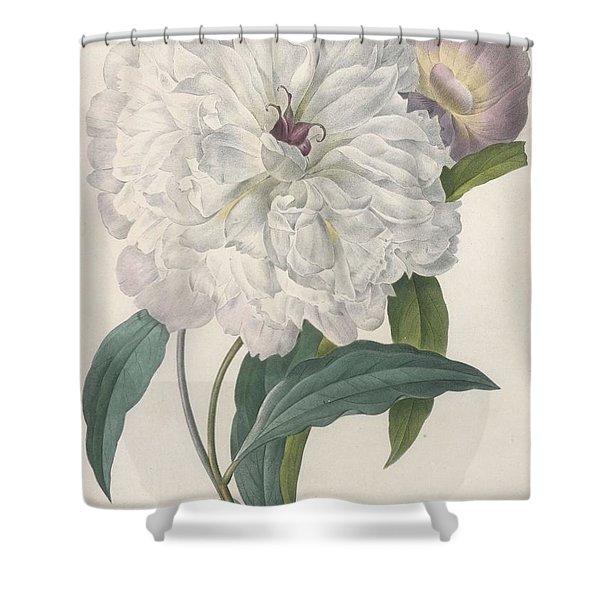 Paeonia Flagrans Peony Shower Curtain