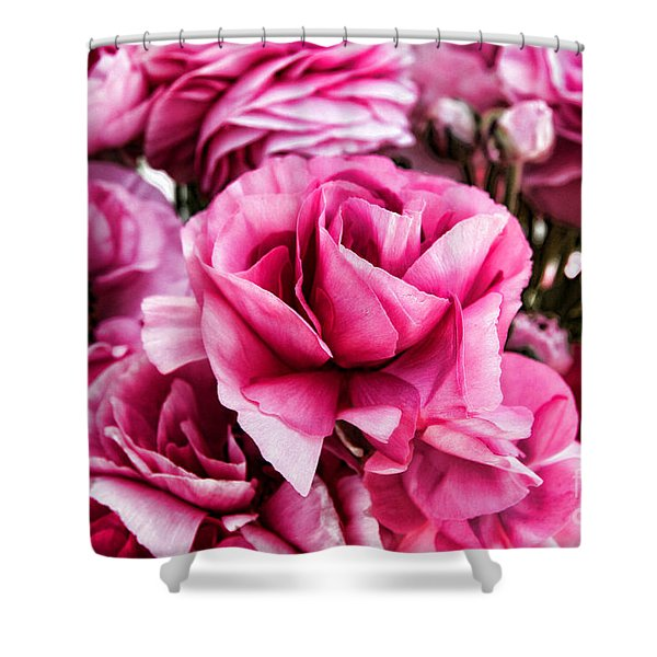 Paint Me Pink Ranunculus Flowers By Diana Sainz Shower Curtain
