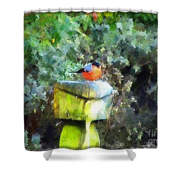 Painted Bullfinch S1 Shower Curtain