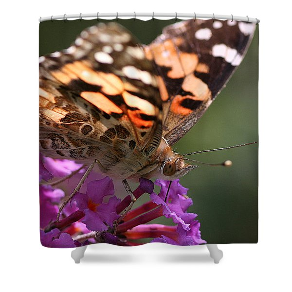 Painted Lady On Butterfly Bush Shower Curtain