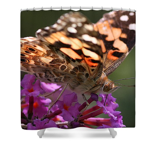 Shower Curtain featuring the photograph Painted Lady On Butterfly Bush by William Selander