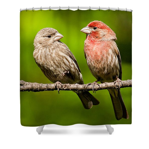 Pair Of House Finches In A Tree Shower Curtain