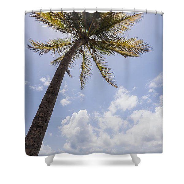 Shower Curtain featuring the photograph Palms Trees Along Luquillo Beach In Puerto Rico by Bryan Mullennix