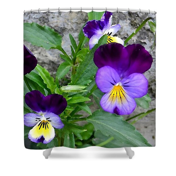 Pansies - Painterly Shower Curtain