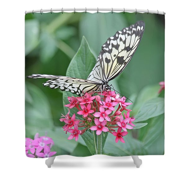 Paper Kite Butterfly - 2 Shower Curtain