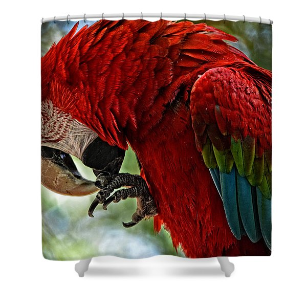 Parrot Preen Hdr Shower Curtain