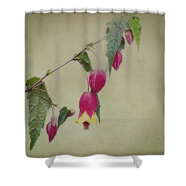 Paulette Shower Curtain