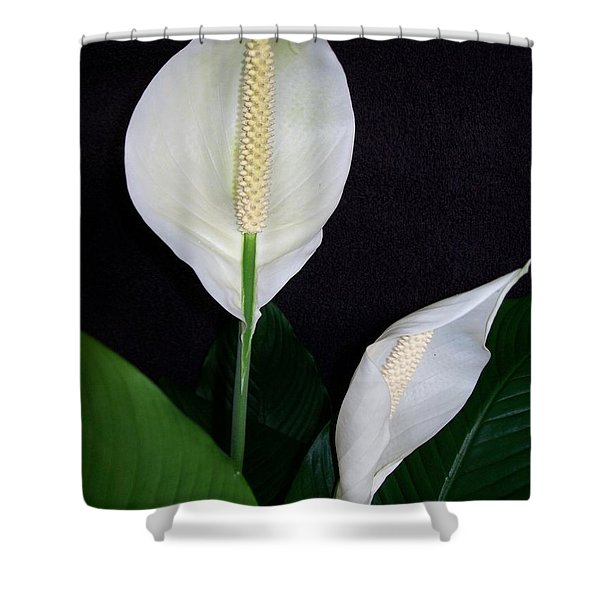 Peace Lilies Shower Curtain