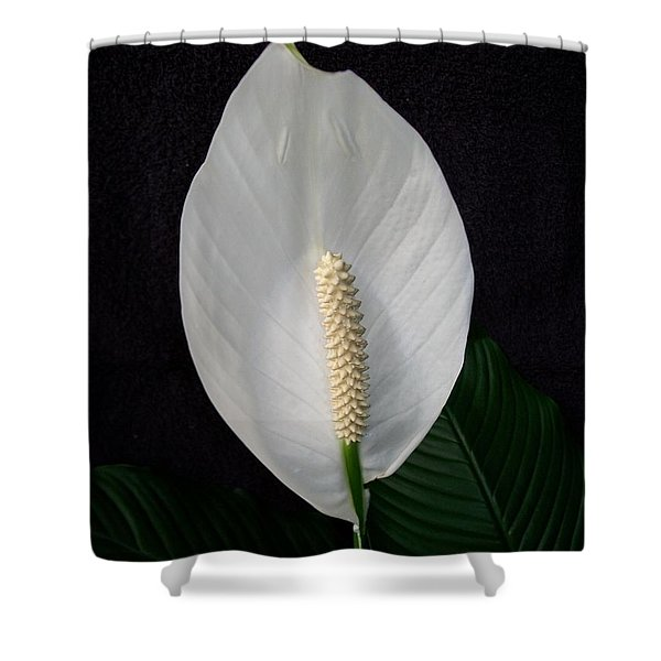 Peace Lily Shower Curtain