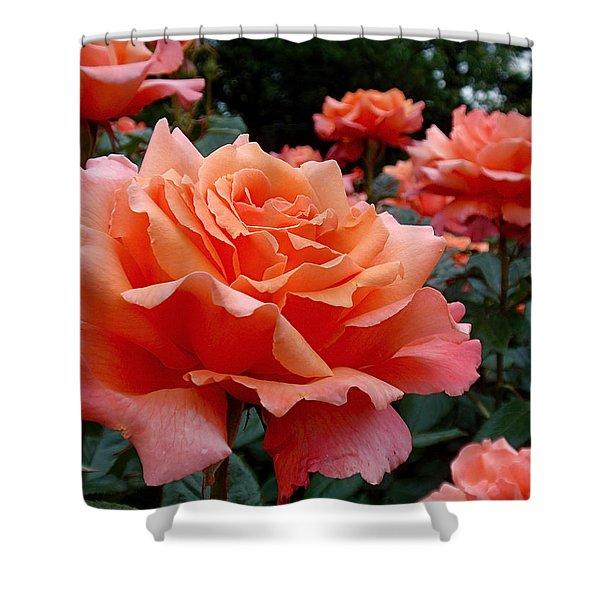 Peach Roses Shower Curtain