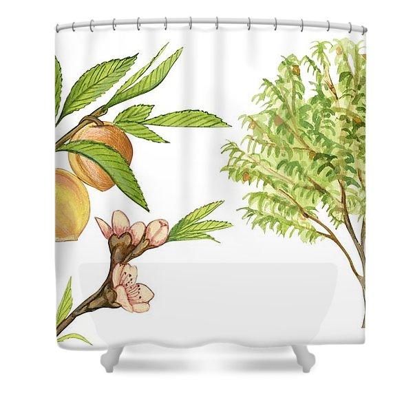 Peach Tree Shower Curtain