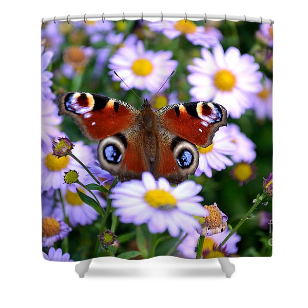 Shower Curtain featuring the photograph Peacock Butterfly Perched On The Daisies by Scott Lyons