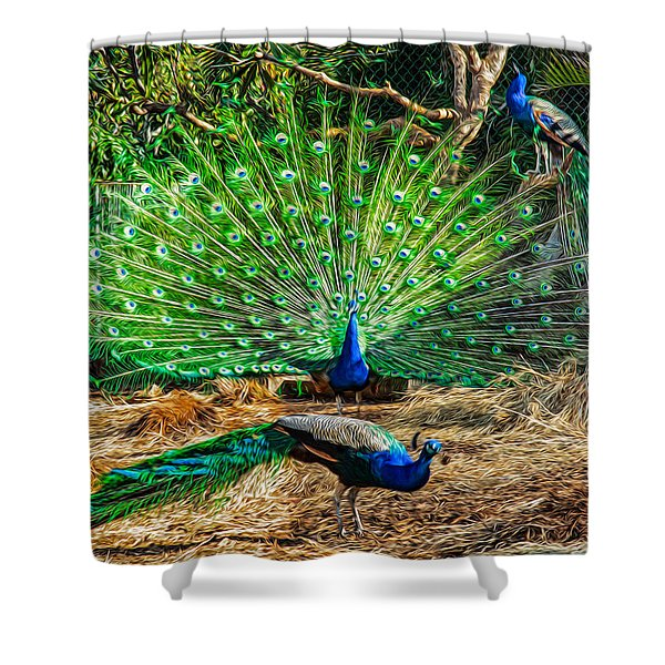 Peacocking Shower Curtain