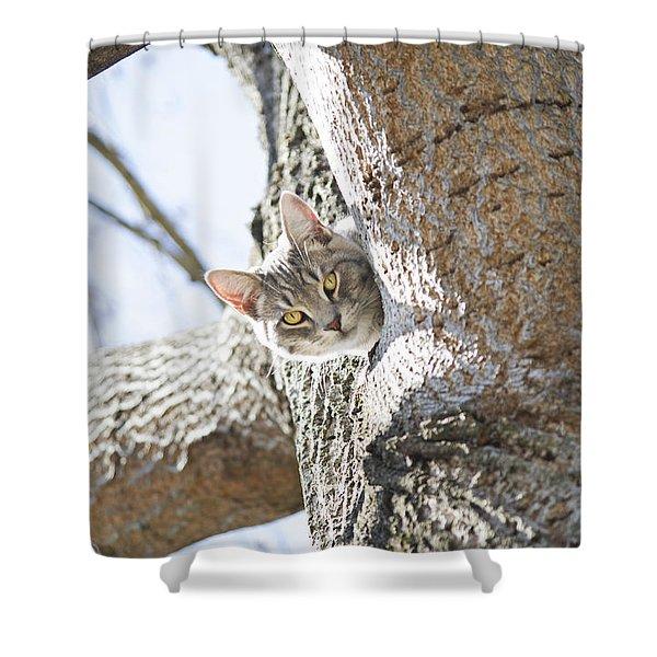 Peaking Cat Shower Curtain