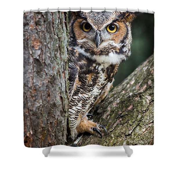 Peering Out Shower Curtain