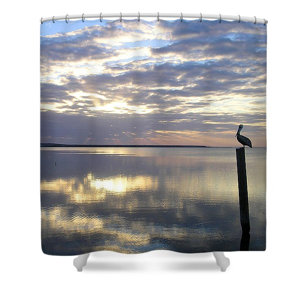 Pelican At Sunset Shower Curtain