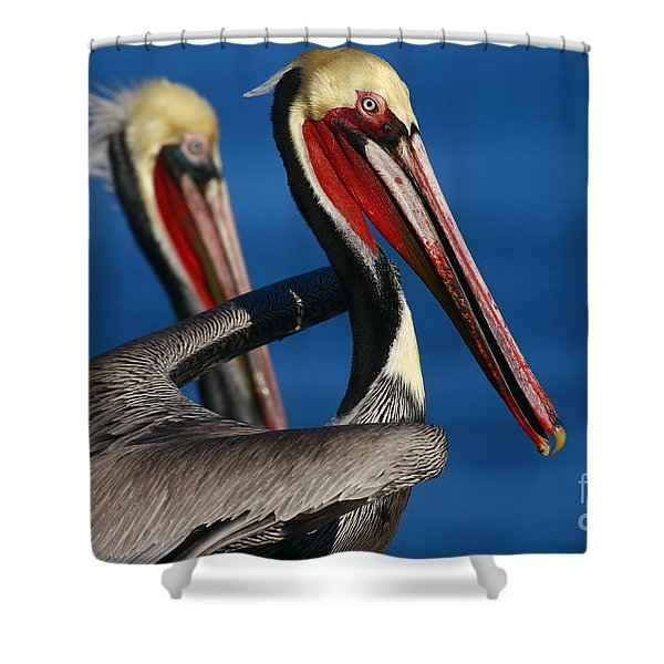 California Pelicans In Waves Shower Curtain