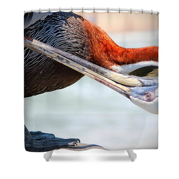 Pelican Itch Shower Curtain