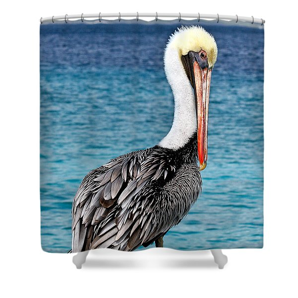 Pelican Portrait Shower Curtain