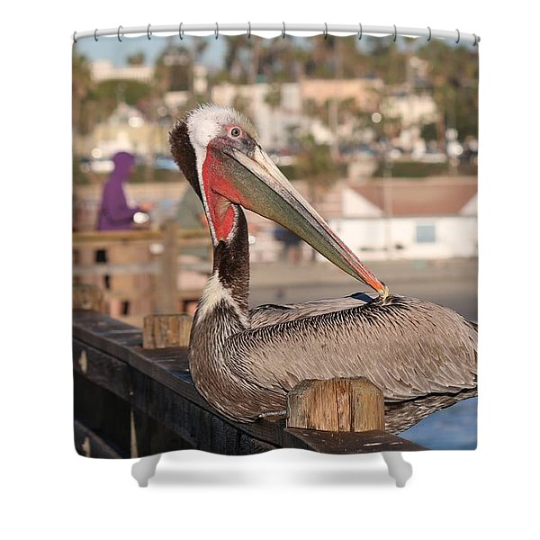 Pelican Sitting On Pier  Shower Curtain
