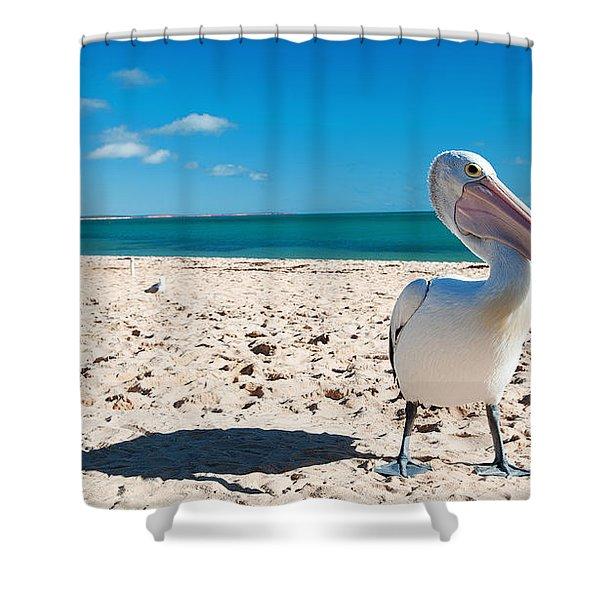 Pelican Under Blue Sky Shower Curtain