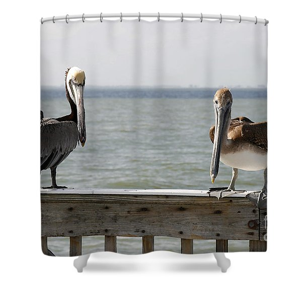 Pelicans On The Pier At Fort Myers Beach In Florida Shower Curtain